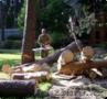 Оказываем услуги по резки, подрезки деревьев
